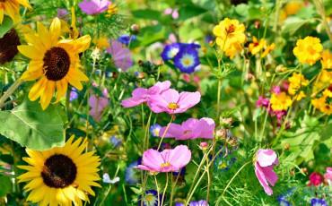 Las plantas más duraderas para tu  jardín