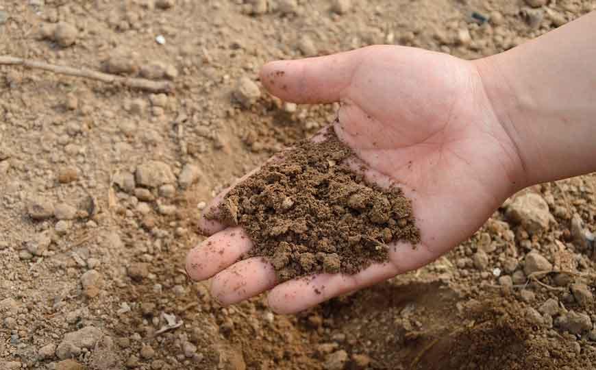 Principales diferencias entre abonos y fertilizantes